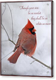 Cardinal In The Snow - D001540 Acrylic Print by Tandem Designs
