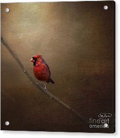Cardinal Old Master - Artist Cris Hayes Acrylic Print by Cris Hayes