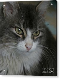 cat Acrylic Print by Alisa Tek
