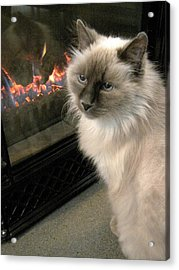 Cat And The Fireplace Acrylic Print by Patricia Drohan