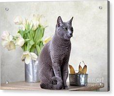 Cat And Tulips Acrylic Print by Nailia Schwarz