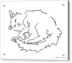 Cat-drawings-black-white-1 Acrylic Print by Gordon Punt
