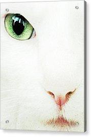 Cat Eye Acrylic Print by Julie Niemela