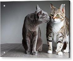 Cat Kiss Acrylic Print by Nailia Schwarz