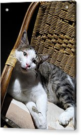 Cat Lying On Wooden Children Chair Acrylic Print by Sami Sarkis