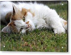 Cat On The Grass Acrylic Print by Raffaella Lunelli