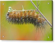 Caterpillar On A Rainy Day Acrylic Print by Bonnie Barry