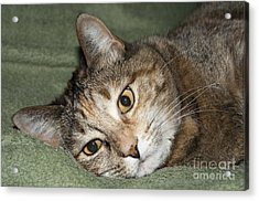 Cats Eyes Acrylic Print by Michael Waters