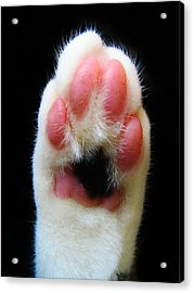 Cat's Honor Acrylic Print by Michelle Milano