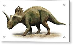 Centrosaurus Apertus, A Prehistoric Era Acrylic Print by Sergey Krasovskiy