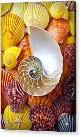 Chambered Nautilus  Acrylic Print by Garry Gay