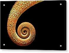 Chameleon Tail Acrylic Print by MarkBridger