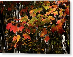 Changing Of The Colors Acrylic Print by Rich Franco