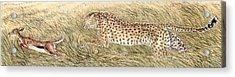 Cheetah And Gazelle Fawn Acrylic Print by Tim McCarthy