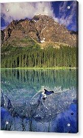 Chephren Lake And Mt. Chephren, Banff Acrylic Print by Darwin Wiggett