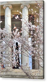 Cherry Blossoms Washington Dc 1 Acrylic Print by Metro DC Photography