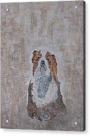Chiari Dog Acrylic Print by Roy Penny