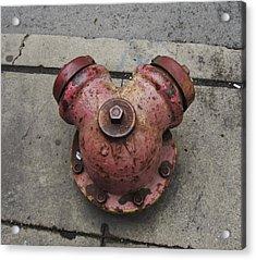 Chicago Hydrant Acrylic Print by Todd Sherlock