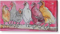 Chickens Acrylic Print by Jenn Cunningham