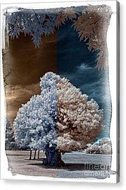 Childhood Oak Tree - Infrared Photography Acrylic Print by Steven Cragg