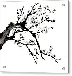 Chinese Ink Plum Blossom Painting Acrylic Print by Evelyn Sichrovsky