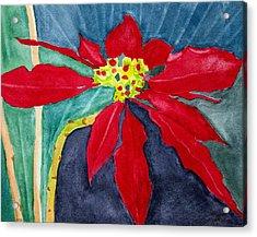Christmas Flower Acrylic Print by Charlotte Hickcox