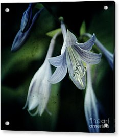 Cladis 02s Acrylic Print by Variance Collections