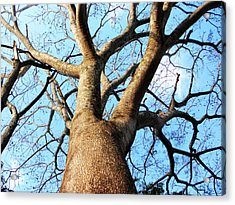 Climb To The Sky Acrylic Print by Rosvin Des Bouillons