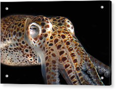 Close Up Of A Dwarf Cuttlefish, Sepiola Acrylic Print by Darlyne A. Murawski