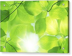 Close-up Of Fresh Green Leaves Acrylic Print by Imagewerks