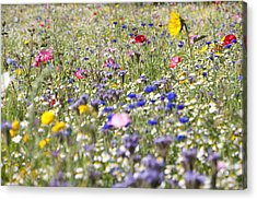 Close Up Of Vibrant Wildflowers In Sunny Field Acrylic Print by Echo