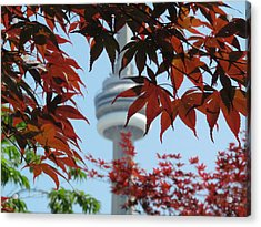 Cn Tower With Japanese Maple Acrylic Print by Alfred Ng