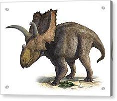 Coahuilaceratops Magnacuerna Acrylic Print by Sergey Krasovskiy