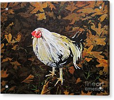 Cockerel Acrylic Print by Carrie Jackson