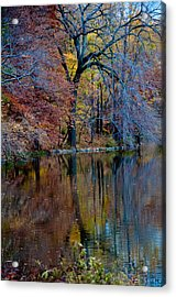 Color Fall Acrylic Print by Martin Goldberg