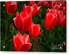 Color Me Red Acrylic Print by Fred Lassmann