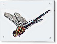 Colorful Dragon Acrylic Print by Don Mann
