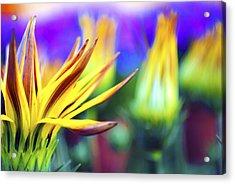 Colorful Flowers Acrylic Print by Sumit Mehndiratta
