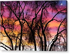 Colorful Silhouetted Trees 27 Acrylic Print by James BO  Insogna