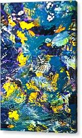 Colorful Tropical Fish Acrylic Print by Elena Elisseeva
