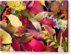 Colors Of Autumn Acrylic Print by Shane Bechler