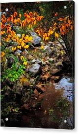 Colors On The Creek Acrylic Print by Toni Hopper