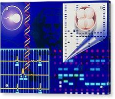 Computer Artwork Depicting Embryo Paternity Test Acrylic Print by Laguna Design