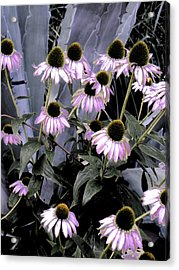 Coneflowers In Abstract Acrylic Print by Beth Akerman