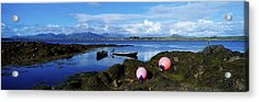 Connemara From Roundstone, Twelve Bens Acrylic Print by The Irish Image Collection