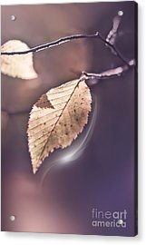 Contre Jour Acrylic Print by VIAINA Visual Artist