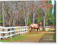 Coosaw - Outside The Fence Acrylic Print by Scott Hansen