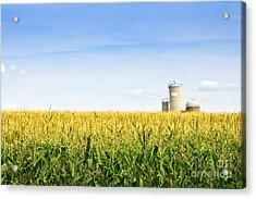 Corn Field With Silos Acrylic Print by Elena Elisseeva