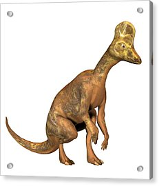 Corythosaurus Dinosaur Acrylic Print by Friedrich Saurer