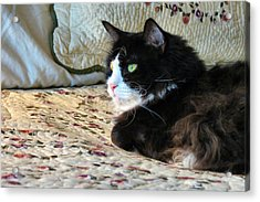 Country Kitty Acrylic Print by Michelle Milano